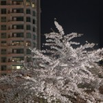 Abbotsford_Nocturne_Blossoms_-3