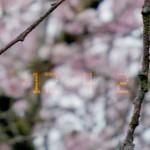 Nikon_Date_Imprint-120020