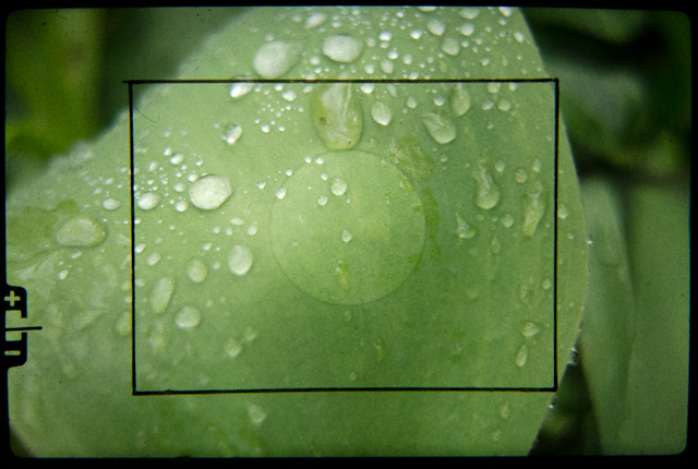 Olympus OM1 viewfinder