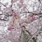wkoopmans_Nikon_Lite_Touch-120020