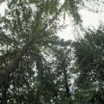 X700_24mm_June2012_023