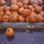CanonWP1_Nov2012_001