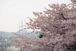 April2013_Fujica_st701_021