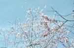 March2013_Minolta_Uniomat_025
