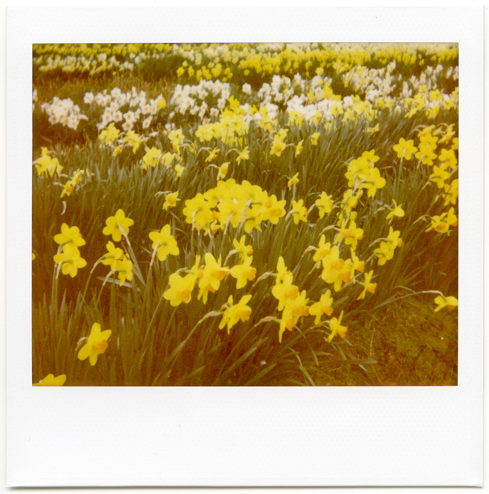 Polaroid_April2013_002