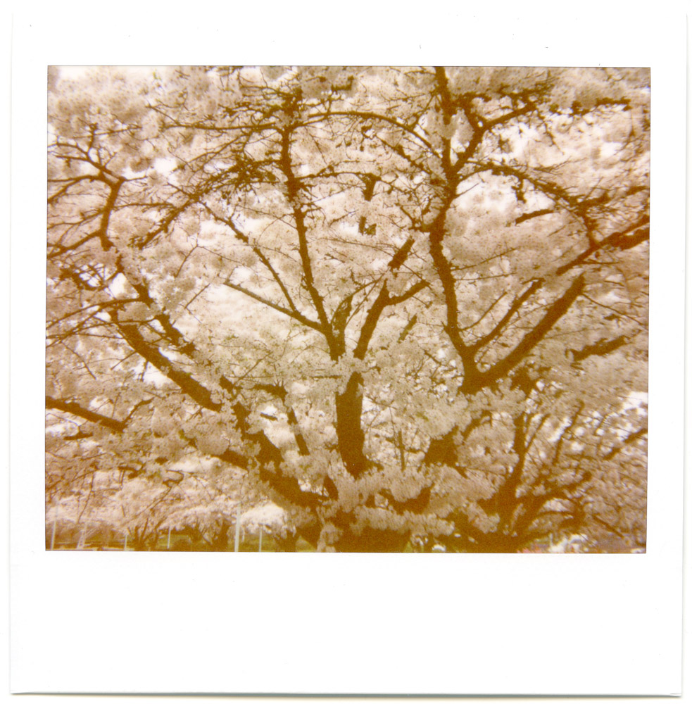Polaroid_April2013_003