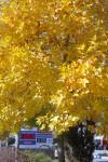 Minolta_M_Fuji400_Oct2013_010