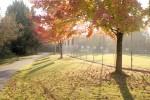 Minolta_M_Fuji400_Oct2013_013