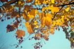 Minolta_M_Fuji400_Oct2013_017