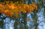 wkoopmans_Autumn-9250