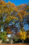 wkoopmans_Autumn-9913