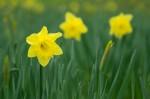 wkoopmans_spring2014-6161