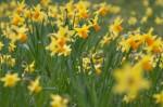 wkoopmans_spring2014-6198