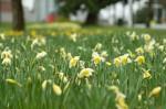 wkoopmans_spring2014-6210