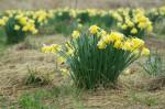 wkoopmans_spring2014-6263