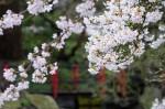 wkoopmans_spring2014-6570