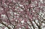 wkoopmans_spring2014-6584