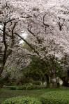 wkoopmans_spring2014-6590