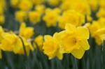 wkoopmans_spring2014-6618