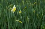 wkoopmans_spring2014-6625