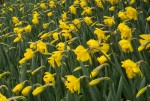 wkoopmans_spring2014-6626