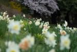 wkoopmans_spring2014-6646