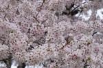 wkoopmans_spring2014-6654