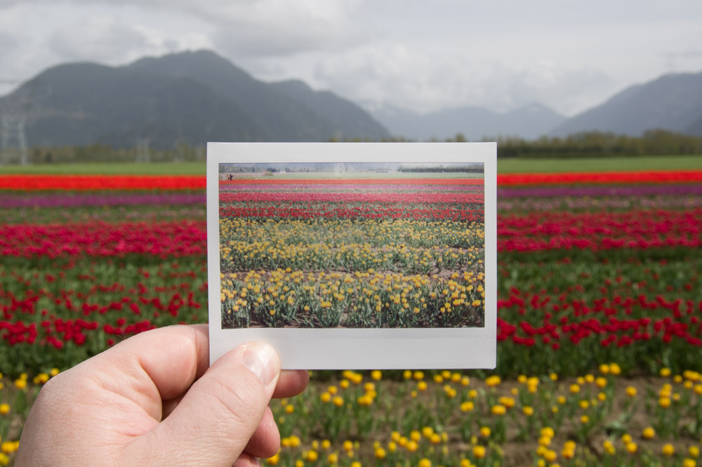 Fuji_InstaxWide_Tulips-6928