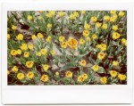 InstaxWide_April2014_001