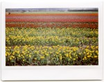 InstaxWide_April2014_002