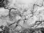 SonyDSCV3_infrared-04979