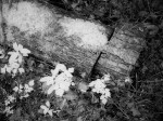 SonyDSCV3_infrared-05005