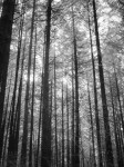 SonyDSCV3_infrared-05032