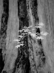 SonyDSCV3_infrared-05045