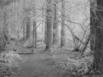 SonyDSCV3_infrared-05048