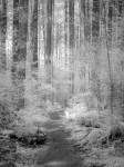SonyDSCV3_infrared-05049