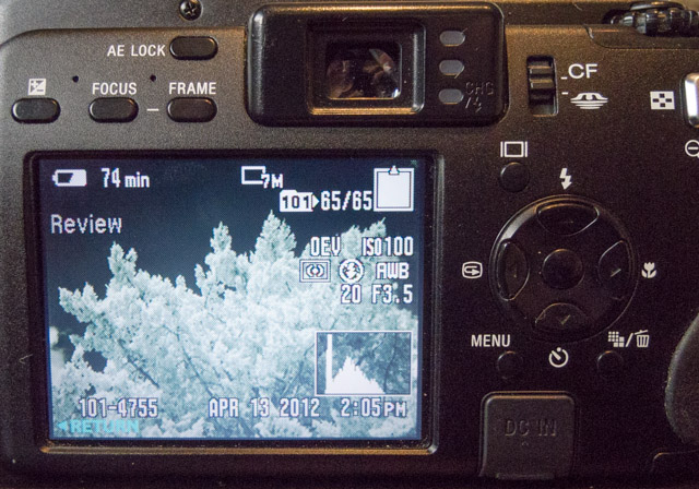 SonyDSCV3_infrared-5229