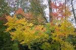 Autumn2014-8209