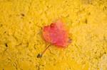 Autumn2014-8220