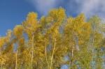 Autumn2014-8226