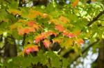 Autumn2014-9687