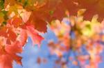 Autumn2014-9694