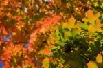 Autumn2014-9698