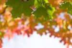 Autumn2014-9712