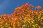 Autumn2014-9721