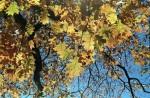 Pentax_Espio120Mi_Nov2014_032