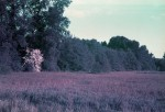 LomochromePurple_May2015_011