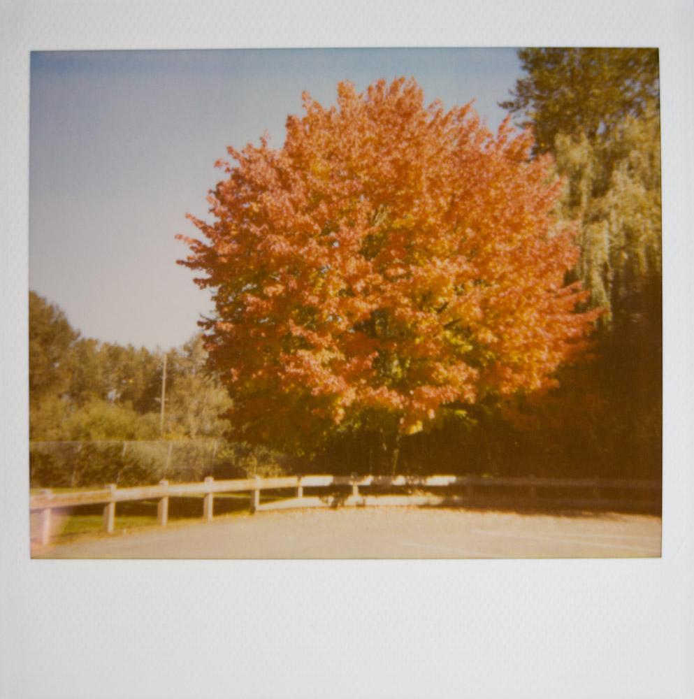 PolaroidSpectraP12a