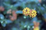 AutoreflexT_Kodak200_2015_018