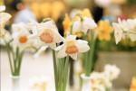 NikonFG_Portra400_April2017_006